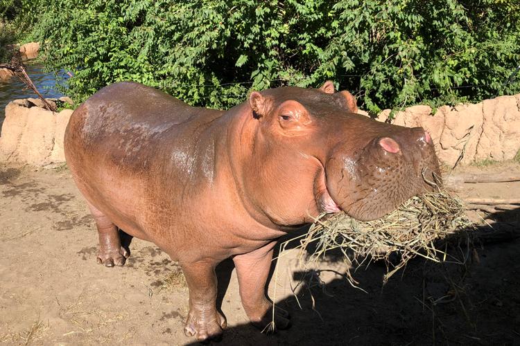 Topeka Zoo – Camp Cowabunga